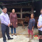 Đồng chí Nguyễn Trung Thành kiểm tra công tác triển khai phòng  dịch tả lợn Châu Phi