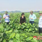 Đoàn cán bộ Sở Khoa học công nghệ kiểm tra mô hình sản xuất nông nghiệp ở Đô Lương