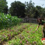 Nhân rộng các mô hình vườn mẫu ở Đô Lương