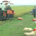 Nông dân Đô Lương tập trung thu hoạch lúa vụ xuân 2019
