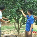 Gương: Đoàn viên Hoàng Văn Thái làm giàu từ chăn nuôi gà