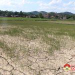 Đồng chí Phùng Thành Vinh Chủ tịch UBND huyện kiểm tra tình hình hạn hán