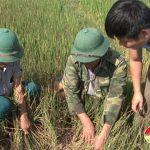 Hạn hán gây thiệt hại lớn ở Đô Lương