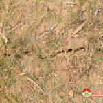 Xã Giang Sơn Đông: Phát hiện vết nứt dài  nguy hiểm trên thân đập Róm