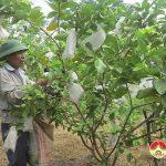 Nhiều nông dân thu nhập ổn định từ kinh tế vườn