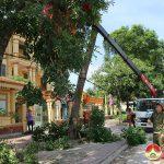 Thị trấn Đô Lương Chặt tỉa cây phòng chống bão.