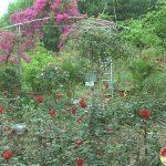 Nhiều hộ dân chuẩn bị hoa phục vụ Tết nguyên đán 2021