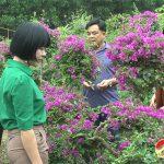 Đô LươngNhiều hộ dân chuẩn bị hoa phục vụ Tết nguyên đán 2021