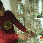 Hội phụ nữ Văn Sơn bế giảng lớp kĩ thuật nghề trồng nấm