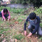 Đô Lương:   Triển khai trồng 100 ha cây lâm nghiệp, bóng mát dịp đầu Xuân