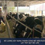 Đô Lương Xây dựng thành công mô hình nuôi bò đực sữa lấy thịt quy mô lớn