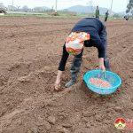Nông dân Đô Lương gieo trỉa, chăm sóc trên 600ha lạc vụ Xuân