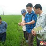 Đô Lương tập trung phòng trừ sâu bệnh đạo ôn trên lúa