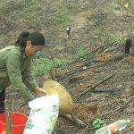 Đô Lương: Tích cực trồng rừng vụ xuân năm 2021