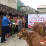Hội Chữ thập đỏ huyện Đô Lương trao bò cho hộ nghèo tại xã Lưu Sơn