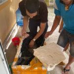Đội cảnh sát giao thông đường bộ số 2 bắt giữ 60 kg nội tạng động vật không rõ nguồn gốc