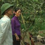 Nông dân Nguyễn Thị Thắng vượt khó vươn lên làm giàu