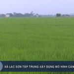 Xã Lạc Sơn  tập trung xây dựng mô hình cánh đồng mẫu lớn