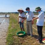 Đồng chí Trần Văn Hiến kiểm tra tiến độ sản xuất hè thu năm 2021.