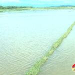 Đô Lương trên 2000 ha lúa hè thu mới gieo ngập lụt, hư hỏng do mưa lớn.