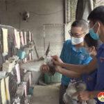Bí thư chi đoàn xóm nuôi bồ câu cho thu nhập cao