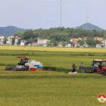 Đồng chí Trần Văn Hiến – Phó Chủ tịch UBND  huyện kiểm tra tiến độ thu hoạch lúa hè thu