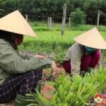 Công ty Lâm nghiệp Đô Lương chuẩn bị 60.000 cây giống trồng cây vụ Thu.