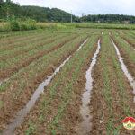 Xã Nam Sơn gieo trồng 10 ha cây vụ Đông