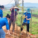 Huyện đoàn Đô Lương tặng 100 cờ Tổ quốc và trồng 30 cây xanh cho xã Đại Sơn